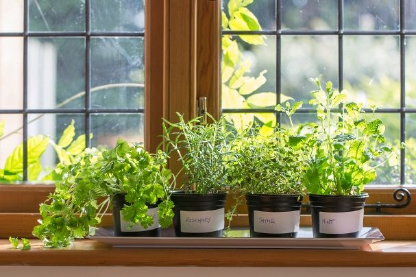 Plant A Windowsill Herb Garden And Let The Sun Shine In. #elevateliving # Herbs