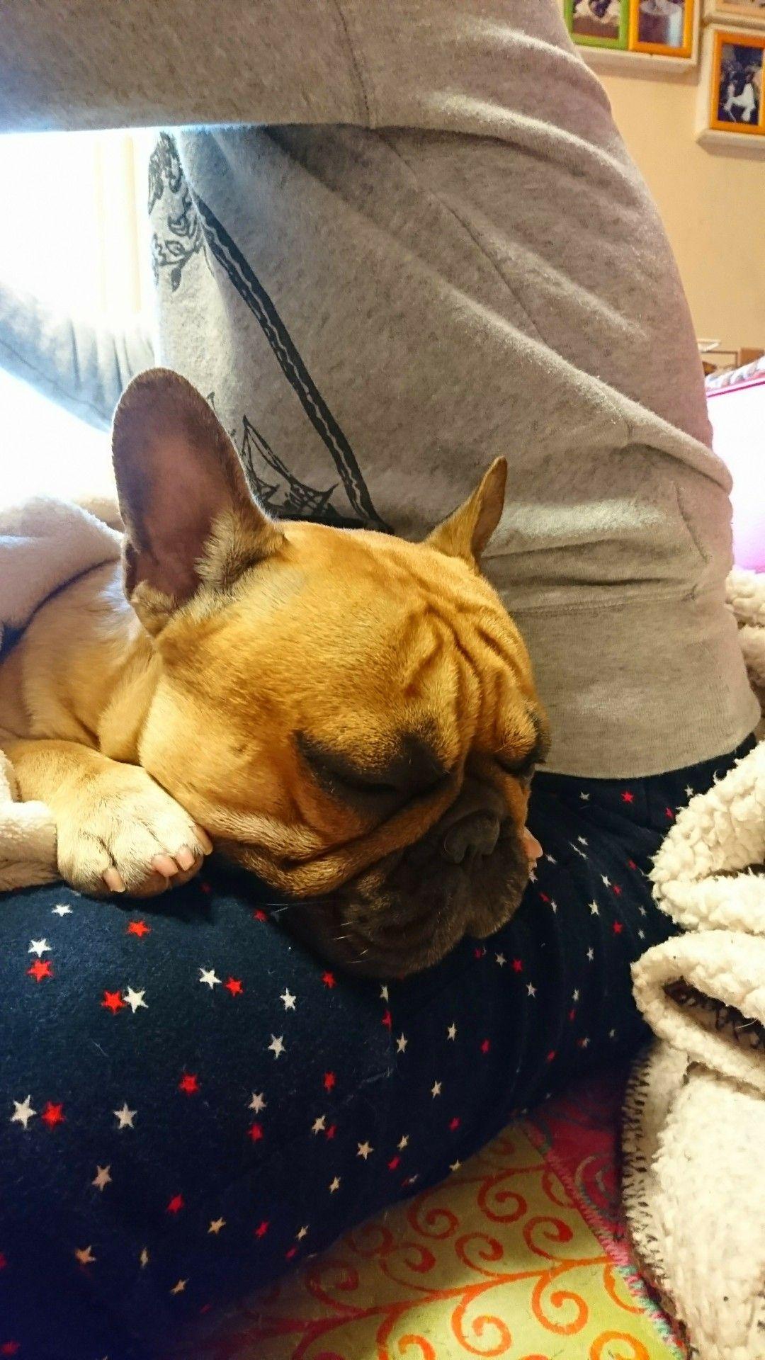 My Best Bedding Theerakthe French Bulldog Hunde Hunde