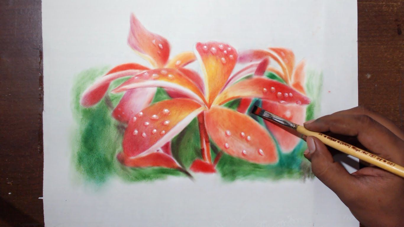 beautiful flower drawings and realistic color pencil drawings