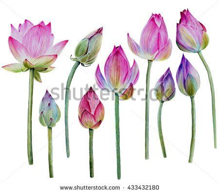 Bud Stock Photos, Royalty-Free Images & Vectors - Shutterstock