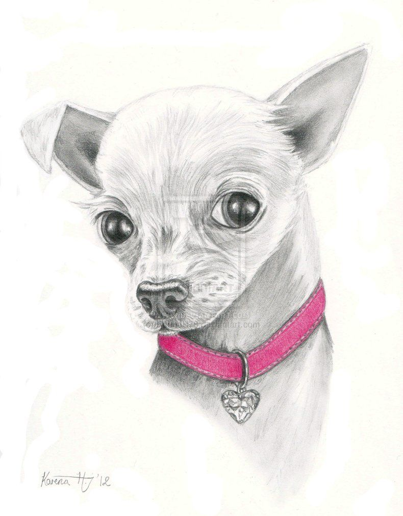 It is a photo of Dramatic Drawing Of Chihuahua