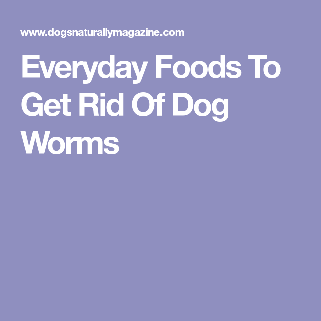 13 Everyday Foods To Get Rid Of Dog Worms Worms In Dogs