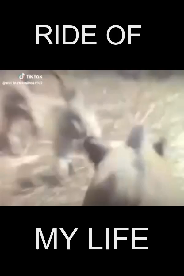I love tiktok #video #viral #ride #monkeys #funny -   Welcome to our website, We hope you are satisfied with the content we offer. If there is a problem - #funny #love #monkeys #Pets #Petsaccessories #Petsdiy #Petsdogs #Petsdogsaccessories #Petsdogsbreeds #Petsdogspuppies #Petsfish #Petsfunny #Petsideas #Petsquotes #Petsunique #Ride #smallPets #smallPetsforkids #tiktok #video #viral