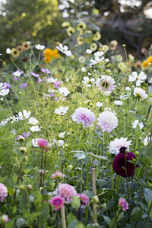 behind the scenes: cut flower garden | cut flower garden, cut