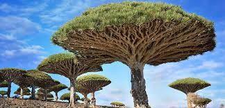 Resultado de imagem para imagens mais lindas do mundo da natureza