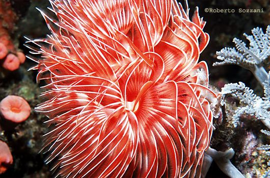 Feather Duster Worm Beautiful Sea Creatures Sea And Ocean Ocean Pictures