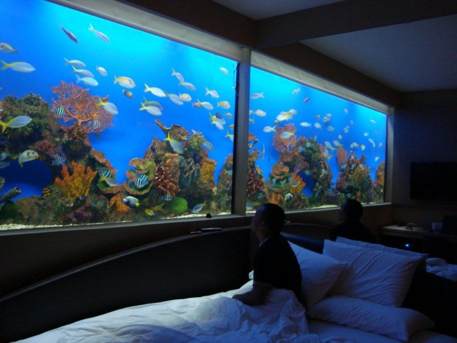 Great bedroom with white bed and pillows also with blue for Fish tank bed