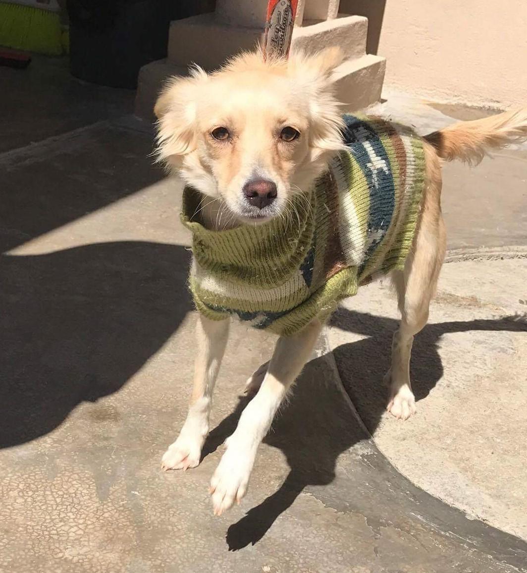 Adopt aurora on adoption dogs pets