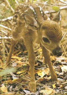 57 Teeny Baby Animals That You Will Love! #cutecreatures