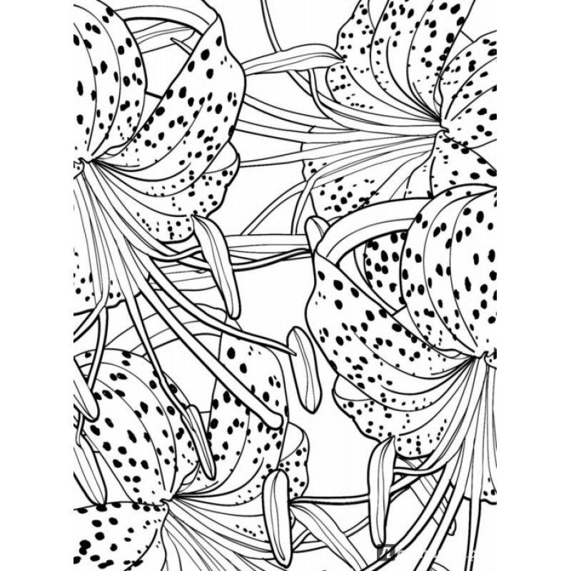 Книга-раскраска «Дивный сад. Раскраска-антистресс для ...