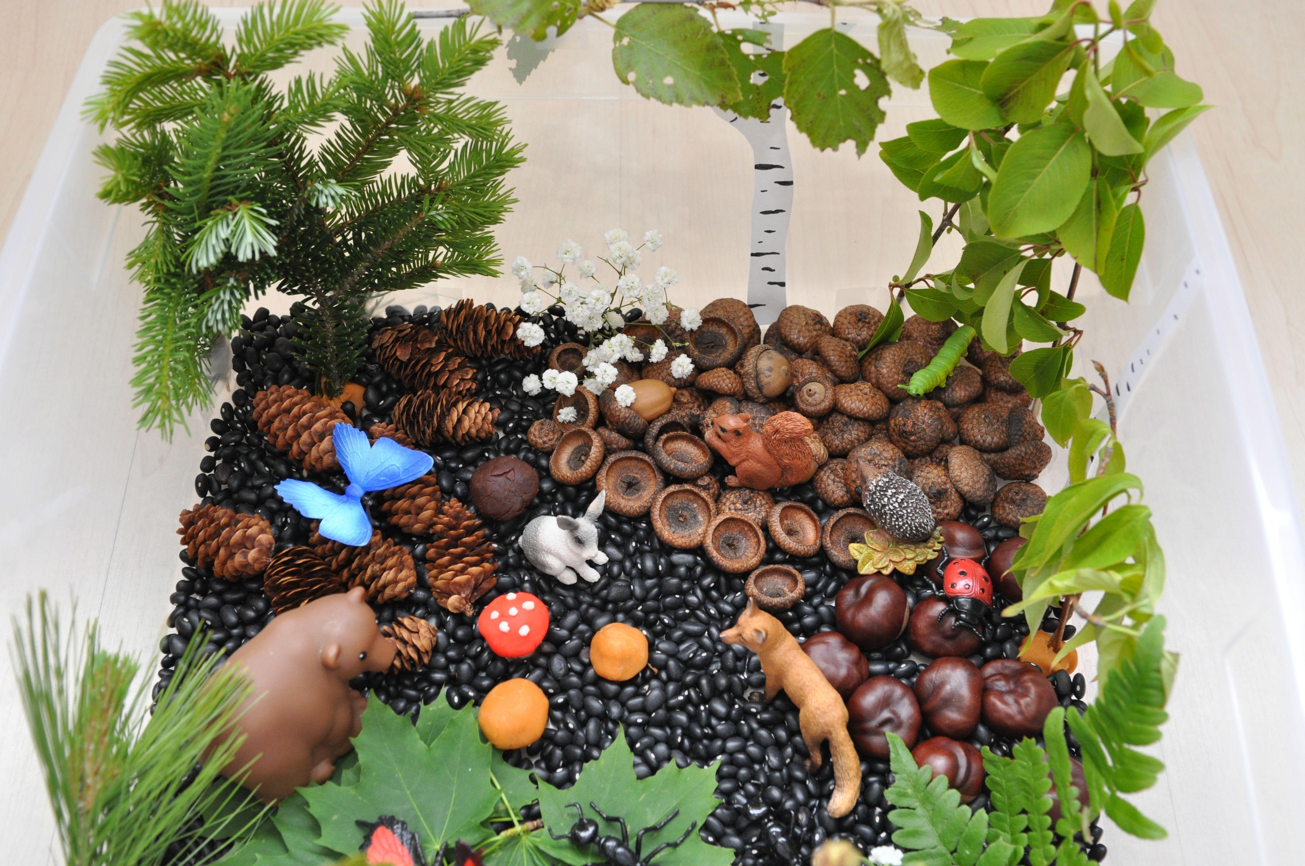 Create a forest in a sensory bin. Sensory bin ingredients: black beans. acorn. chestnuts. pine cones. leave… | Forest animals preschool. Sensory ...