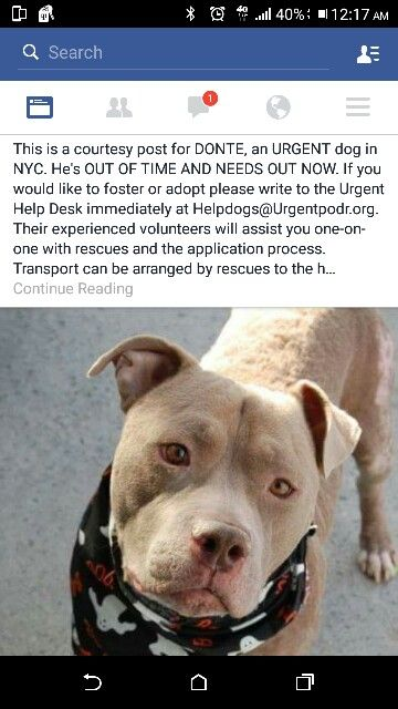 Donte Nyc Adopt Rescue Pet Dog Pitbull Dogs Adoption Pets
