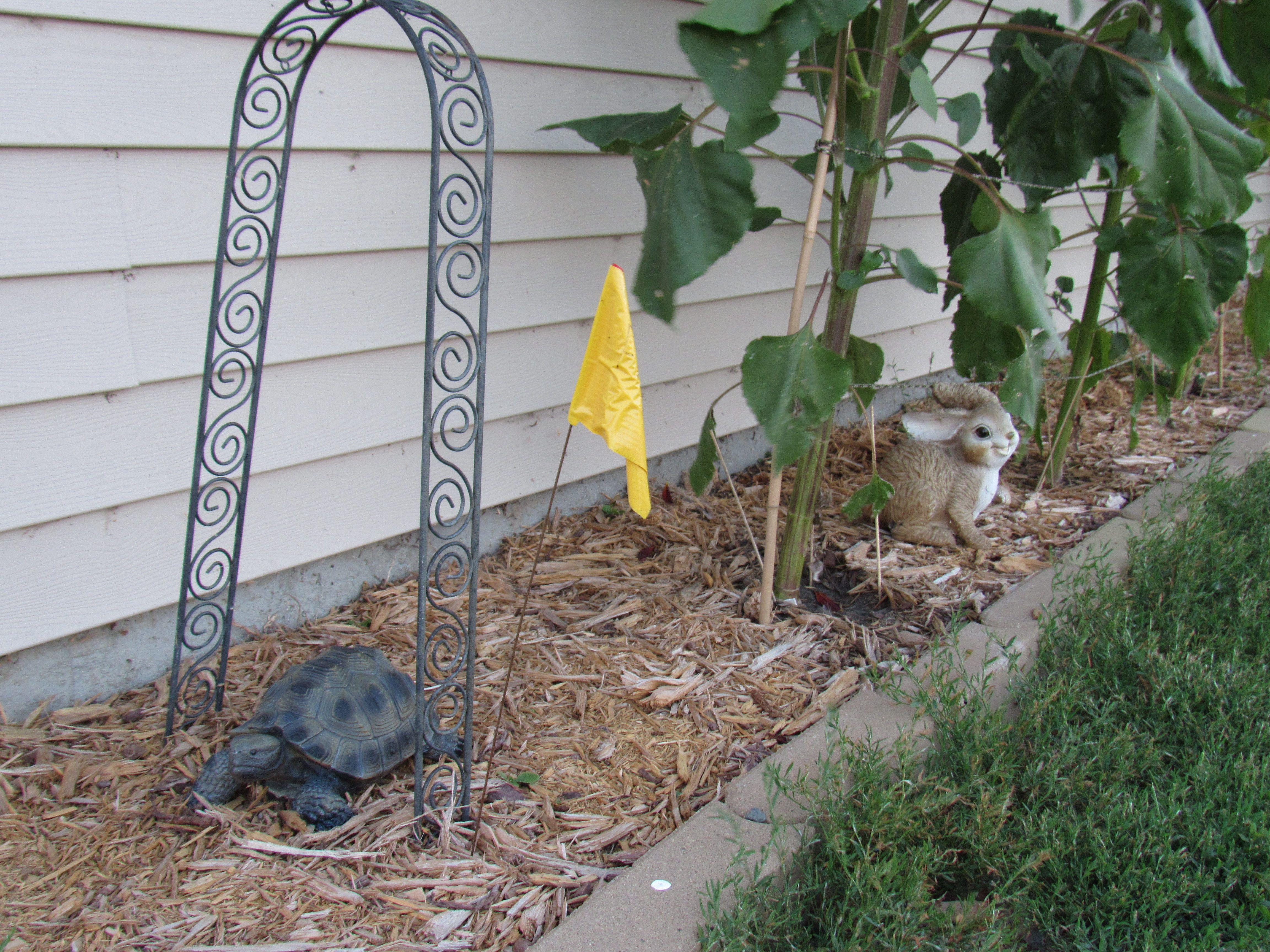 The tortoise and the hare story thyme gardens pinterest gardens