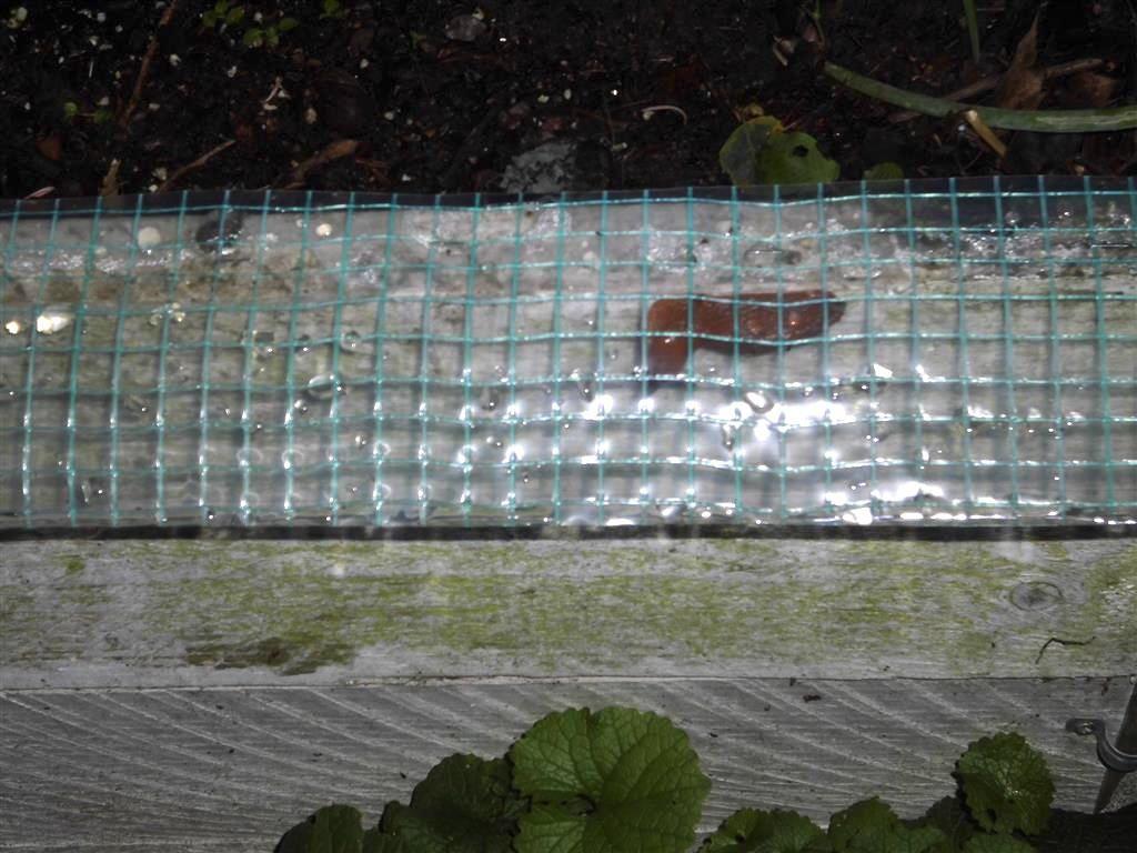 Preiswerter Schneckenschutz Im Hochbeet Es Funktioniert Mit Bildern Schneckenschutz Hochbeet Schnecken