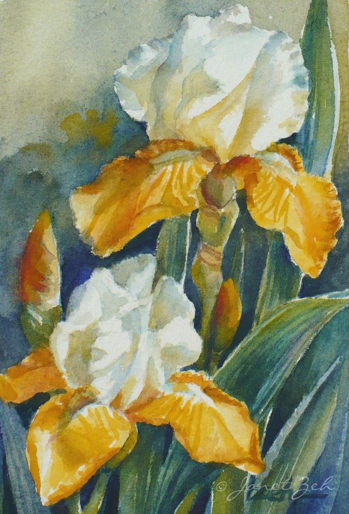 Yellow And White Iris Flower Original Watercolor Floral Painting
