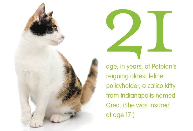 Why You Need Pet Insurance Embrace Pet Insurance Pets Pet Insurance
