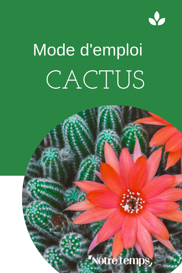 5 Conseils Pour Avoir De Beaux Cactus Cactus Terrarium Pour Plantes Grasses La Main Verte