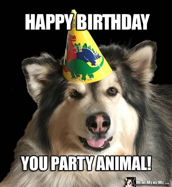 Handsome Dog In Party Hat Says Happy Birthday You Animal