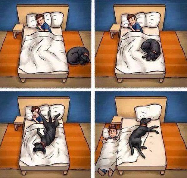 Funny Cartoon Sleep Dog Sleeping Dogs Dog Owners Dogs