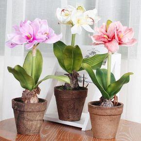 Маленькая хитрость: чтобы цветы в доме цвели пышно и долго ...