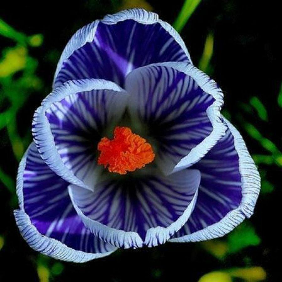 30 Imgenes De Flores Hermosas Visors And Flowers