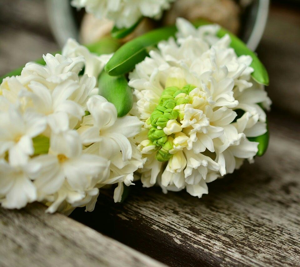 Pin By On Blossom Blossom Pinterest White Flowers