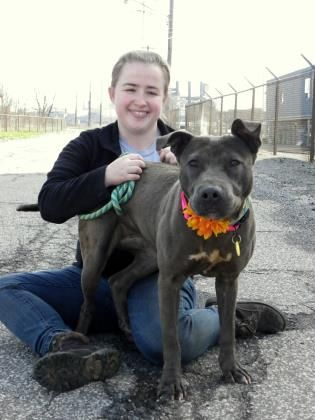 Pin On Adoptions Cleveland Kennel