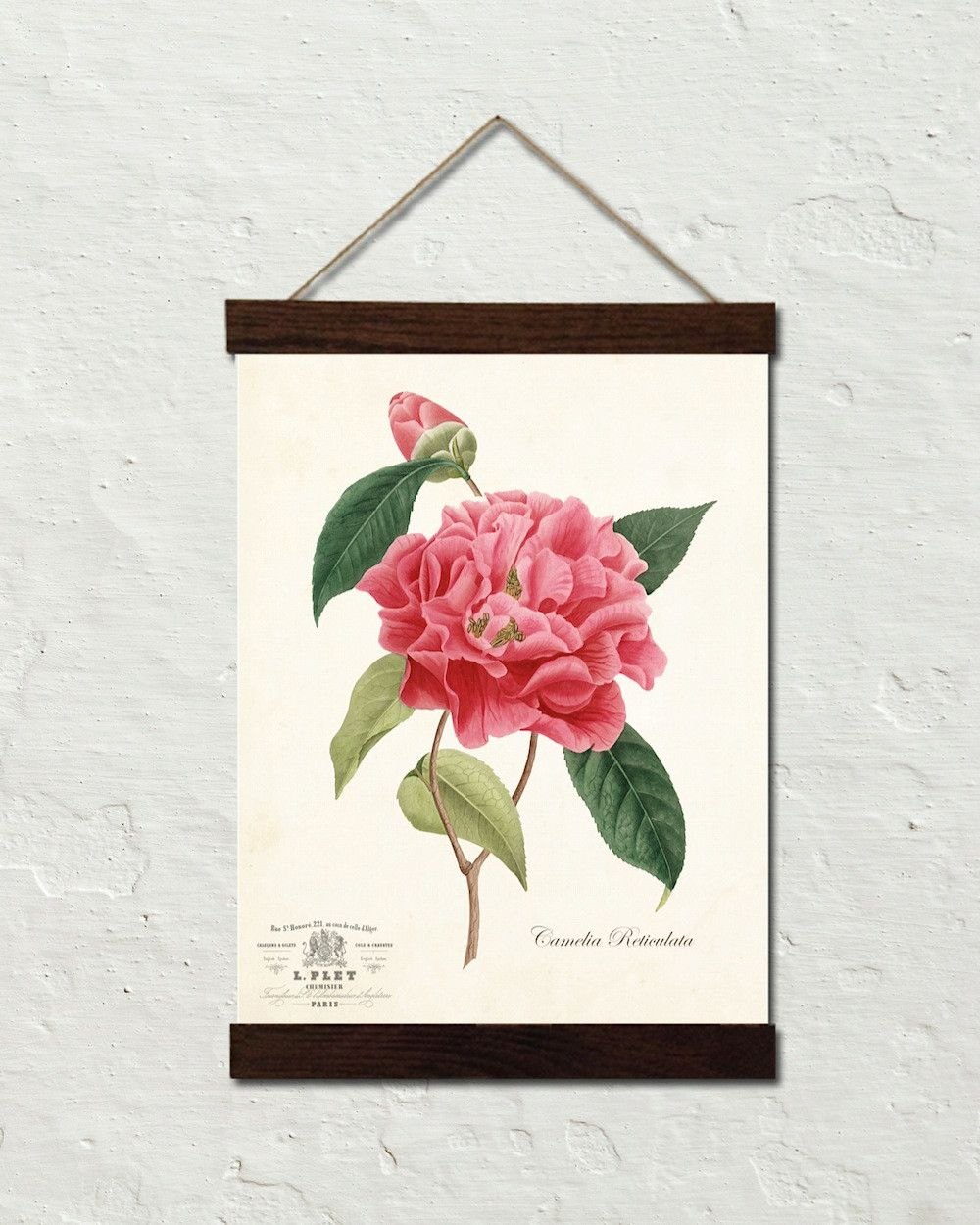 Vintage french camelia reticulata botanical art canvas wall hanging