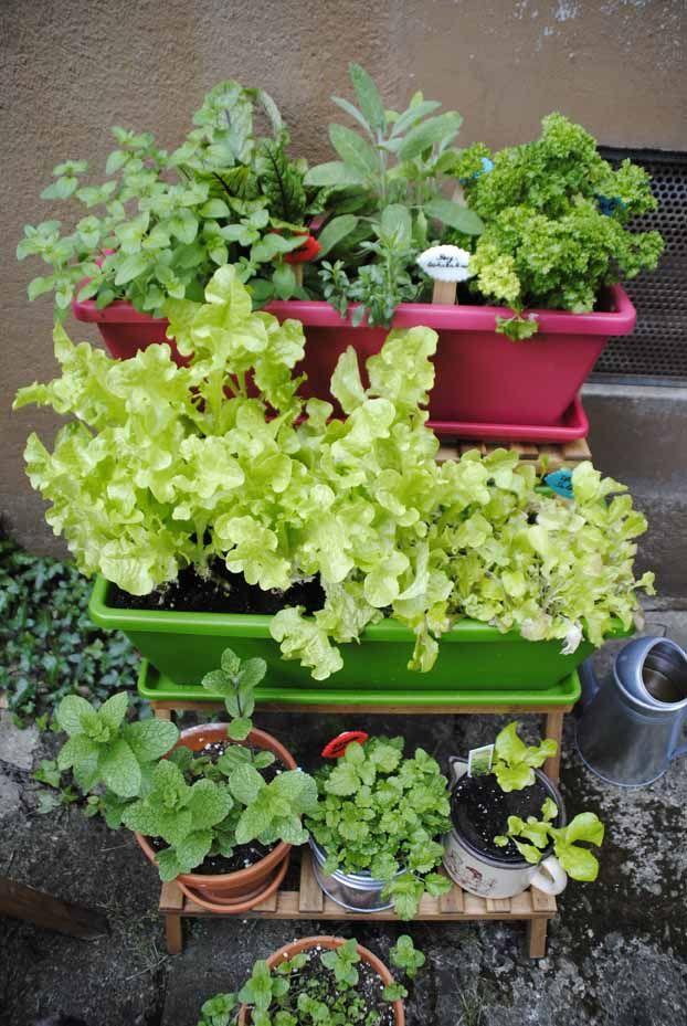 Topfpflanzen garten pinterest topfpflanzen terrasse pflanzen und gartenideen - Topfpflanzen garten ...