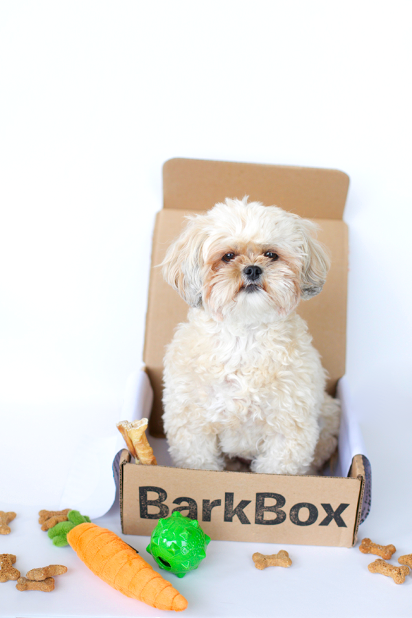 Do You Have A Subscription Service To A Pet Delivery With Images Fancy Dog Dogs Animals
