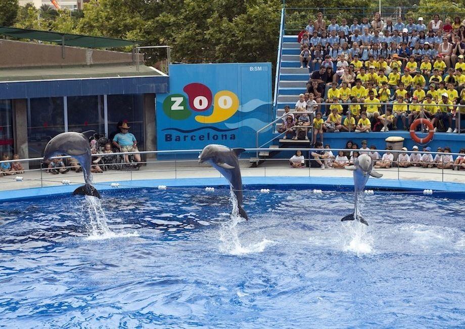 Zoo Barcelona zoo de barcelona zoos