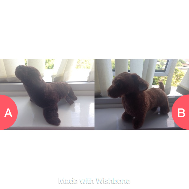 Teddy dashhund or seal Click here to vote @ http://getwishboneapp.com/share/2444446