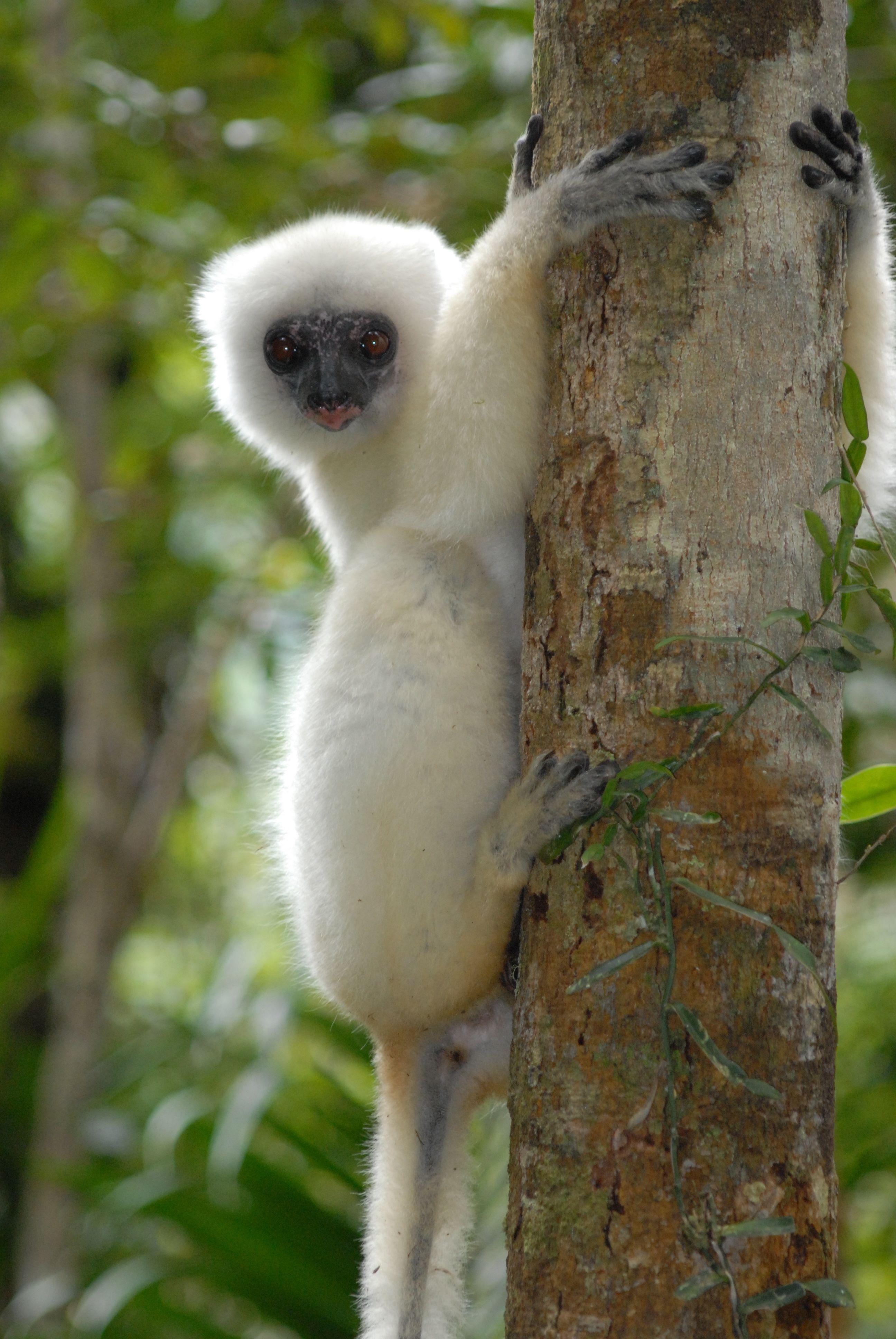 World S Most Endangered Species