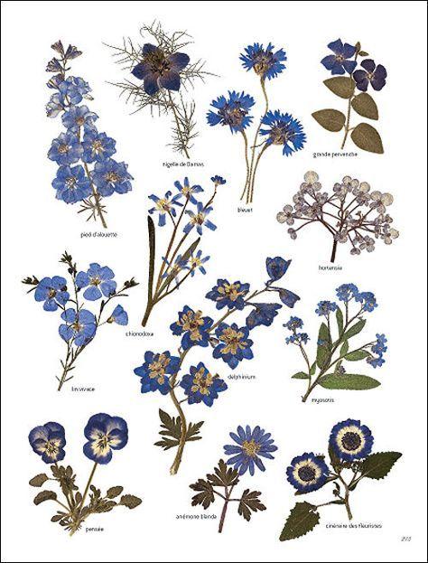 Fleurs Bleuatres Herbier Junk Journal En 2019 Dessins