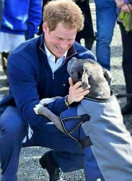 Prince Harry with a service dog
