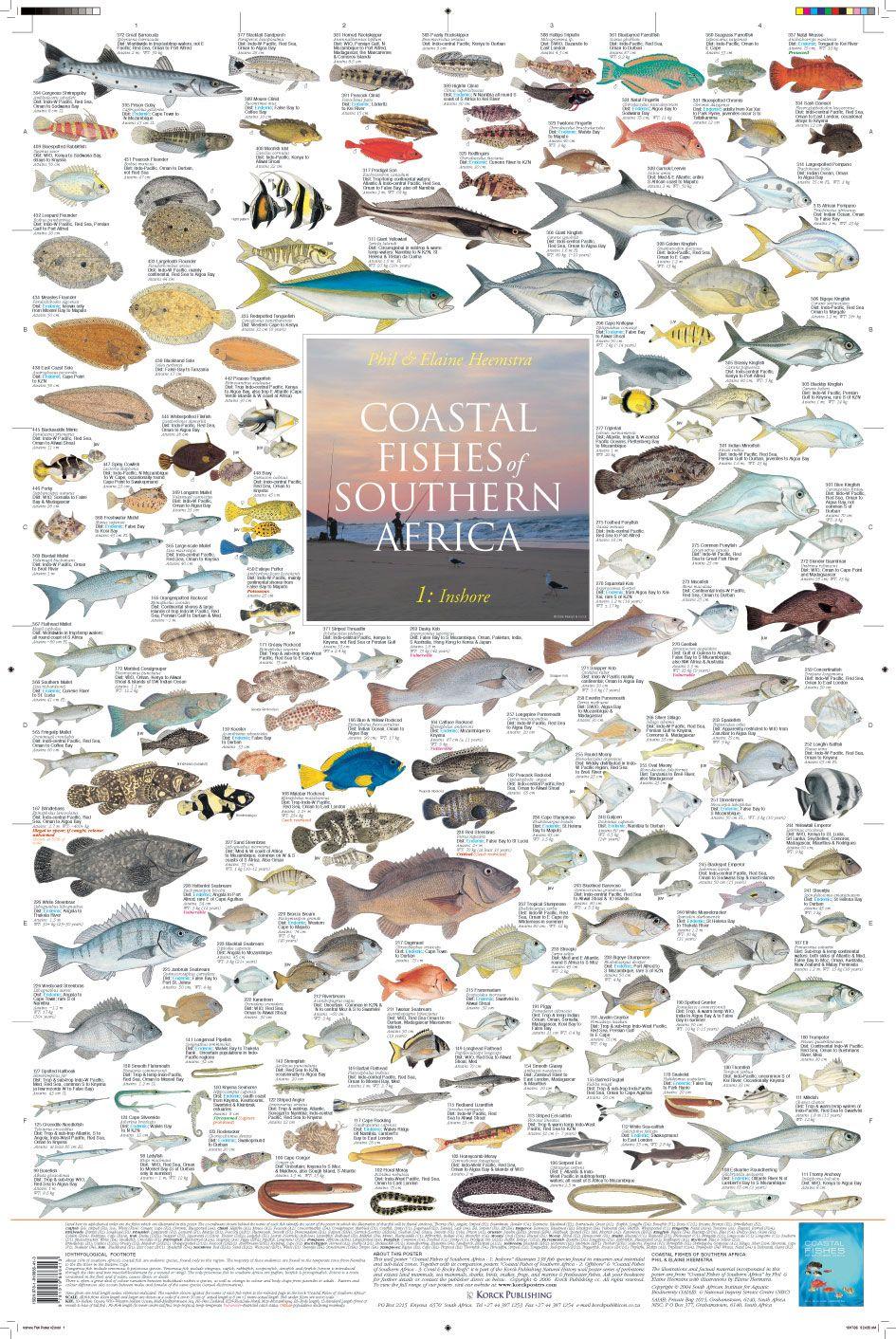 """""""Coastal Fishes of Southern Africa - 1: Inshore"""" (2010 Korck Publishing)"""