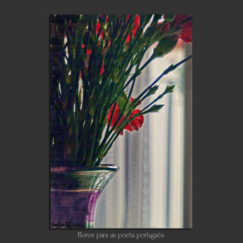 Meridiana claridad: Flores para un poeta portugués
