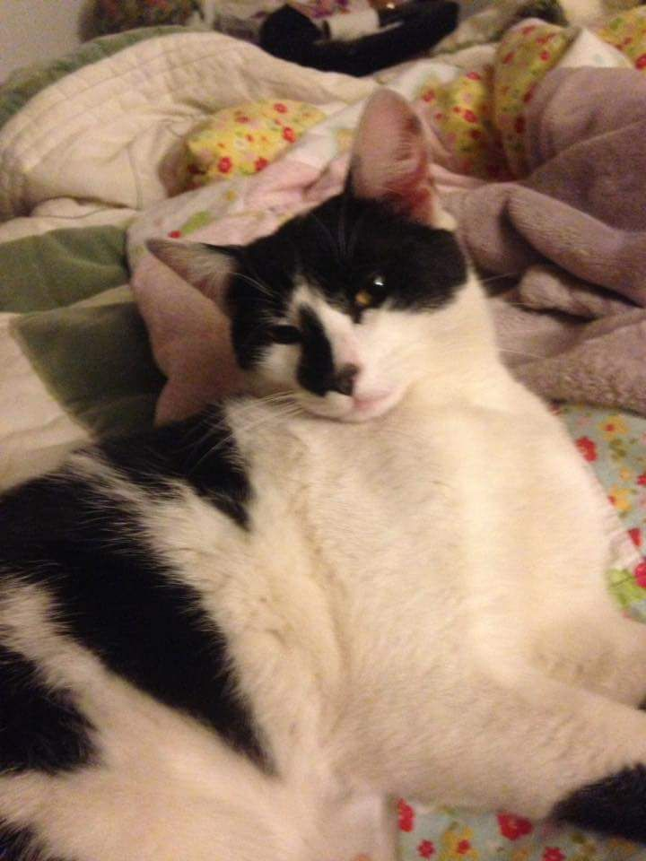 Pin by Sharon Boulanger on Lost Cats CT | Dr adam, Maureen