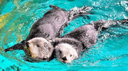 福岡 水族館