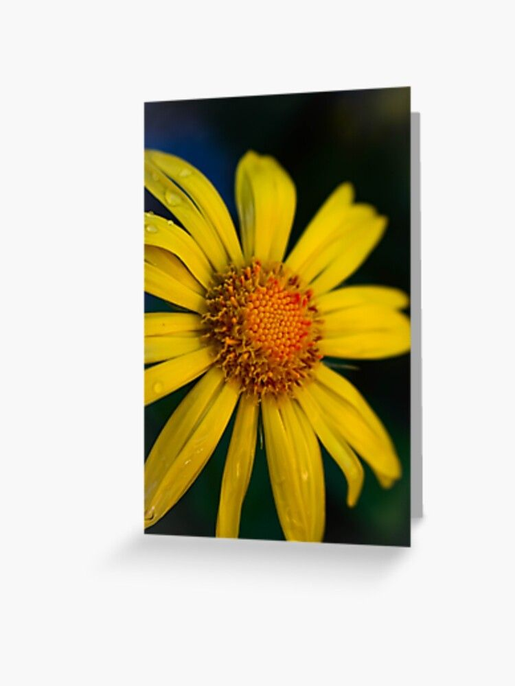 Cool Yellow Daisy Greeting Card By Aloresarts Redbubble Greeting Cards Aniversary Gifts Greetings