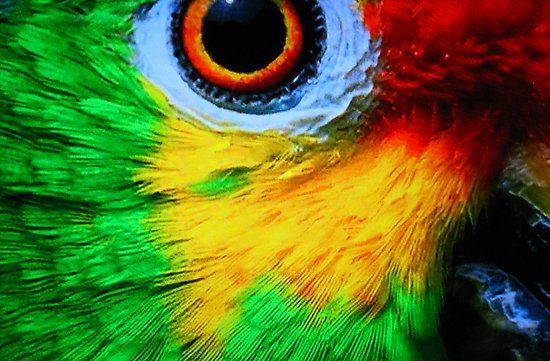 Community Post 15 Parrot Eyes Really Close Up Parrots Art Wild Eyes Parrot