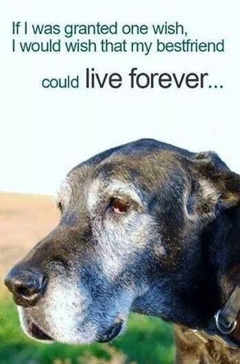 An Old Friend Dog Quotes Dogs Dog Lovers