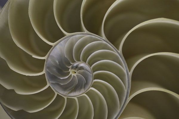 The Art of Reduction: Art (design) imitates life OR Biomimicry