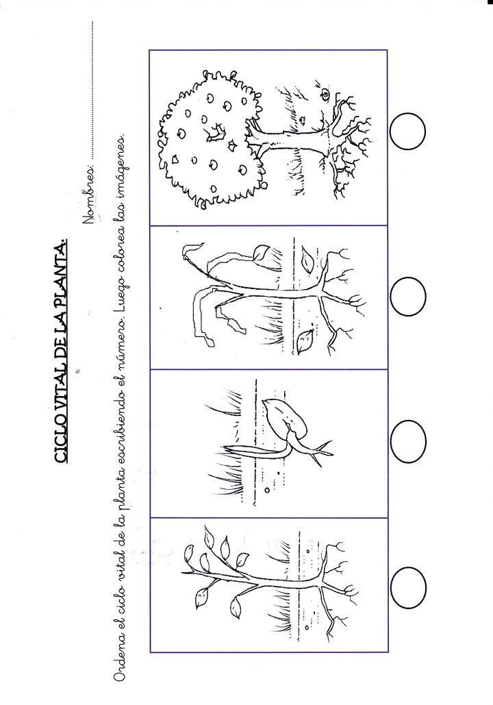 Pin de juliana tob n en art stica math y math equations for Como crecen los arboles para ninos