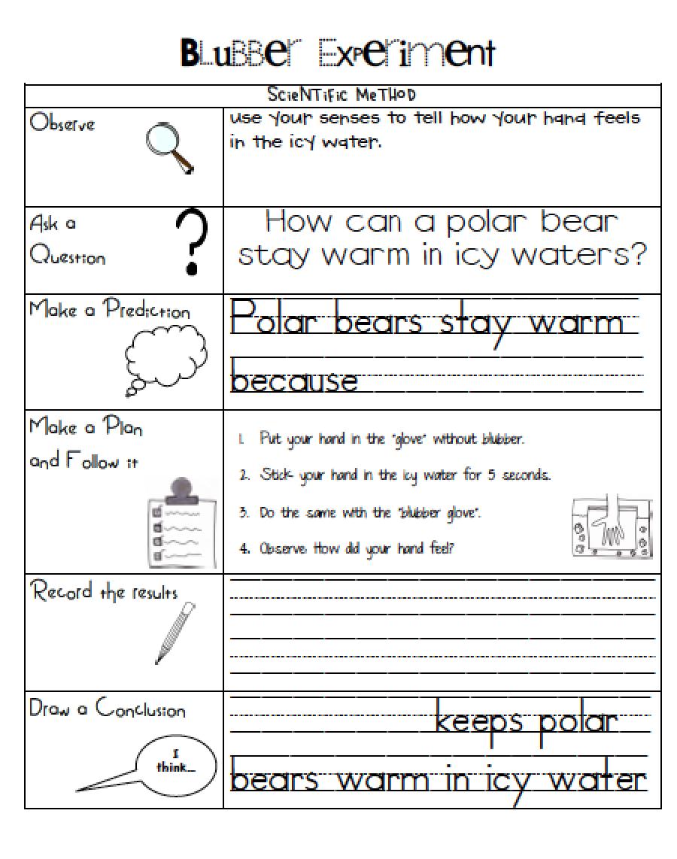 Sarah S First Grade Snippets Polar Bear Blubber Experiment Polar Bear First Grade Science Classroom Books [ 1142 x 900 Pixel ]