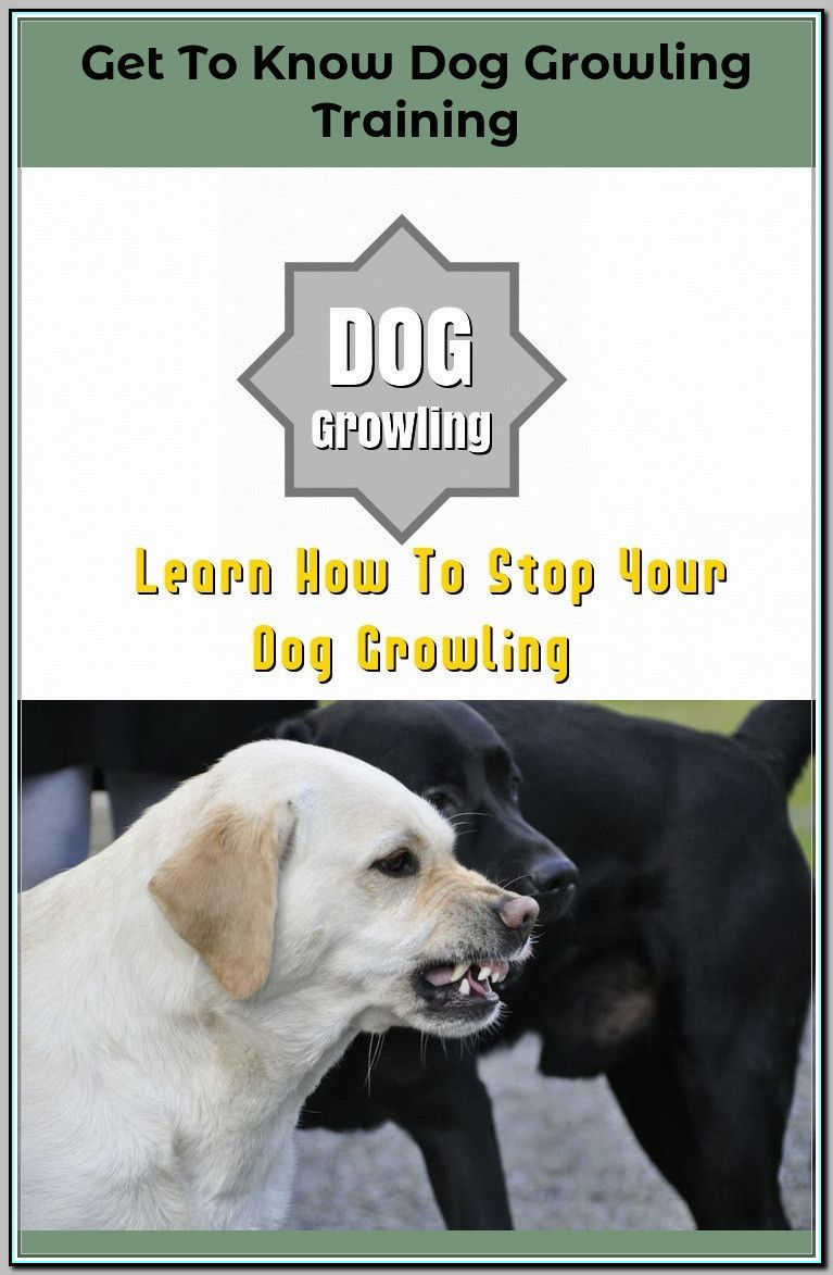Dog Training Lesson Plan Click The Pic For Lots Of Dog Obedience