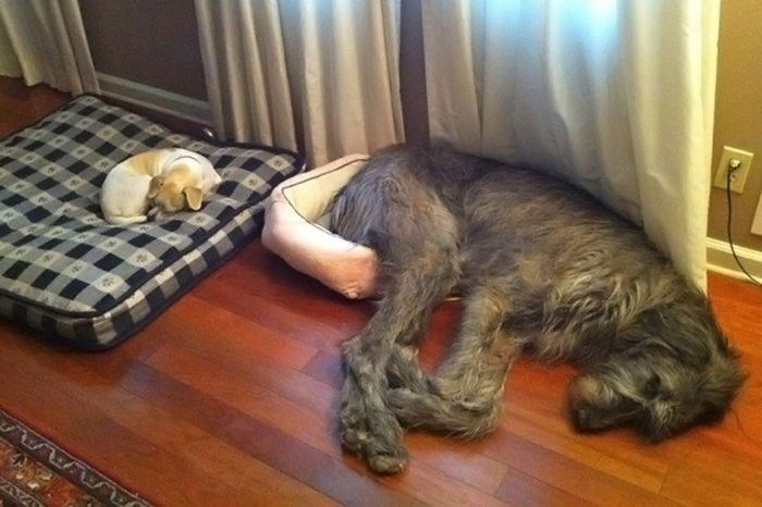 Monday's pets onfurniture - desire to inspire ~ interior design eye candy -