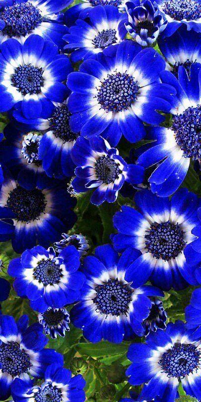 Sinfonía en azul...