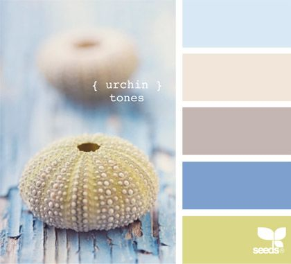 urchin tones My future house ;) Pinterest Ocean themes, Themed