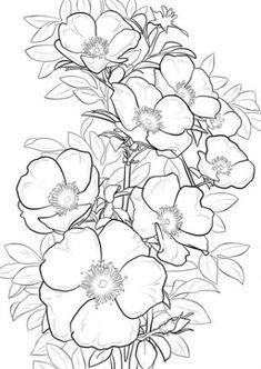 rosen ausmalbilder | rose malen, ausmalbilder, malvorlagen blumen